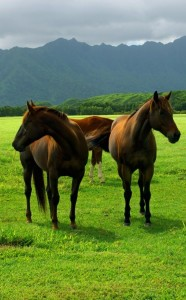 Amazing-Animal-Pics-Horses-on-Green-Grass-High-Mountains-as-Background
